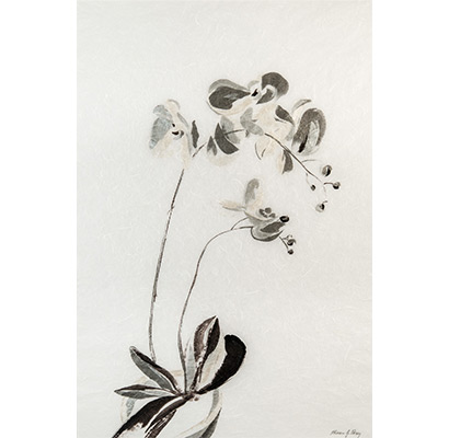 Silver Orchid 2